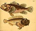 Naturgeschichte in Bildern mit erläuterndem Text (Taf. XLIII) (6058663411).jpg