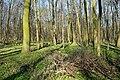 Naturschutzgebiet Haseder Busch - Im Haseder Busch (45).jpg
