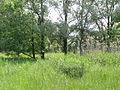 Naturschutzgebiet Heuckenlock 21.05.2014 Phase 38.JPG