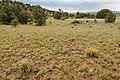 Near Alamosa Creek - Flickr - aspidoscelis (1).jpg