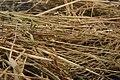 Needle in haystack3.jpg