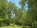 Neuer Botanischer Garten - Labyrinth 002.jpg