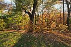 New York Botanical Garden November 2015 003.jpg