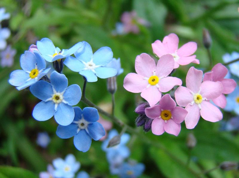 Flores de janeiro a dezembro 31