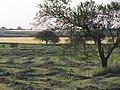 Nogoyá, Entre Ríos, Argentina - panoramio (125).jpg