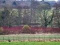Northington Grange, park - geograph.org.uk - 1103733.jpg