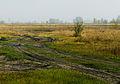 Novosilky (Vyshhorod) floodplain3.JPG