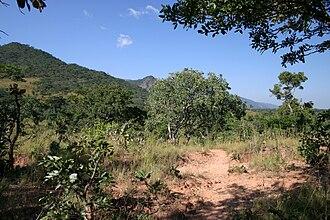 Miombo - Miombo forest on the Nyika Plateau, Tanzania