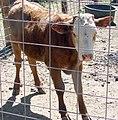 Oak Glen, Los Rios Rancho 6-2012 (7409449982).jpg