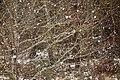 Oak in snowfall.jpg