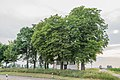 "Oettingen Baumgruppe vor der Kapelle ""Weisses Kreuz"".jpg"
