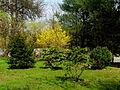 Ogrod wiosna2013.JPG