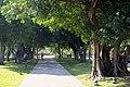 Old Trees 老樹 - panoramio.jpg