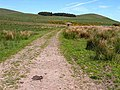 Old road on Mile Moor - geograph.org.uk - 1332156.jpg