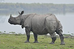 Assam's Kaziranga National Park is home to most of the world's one-horned rhinoceroses, the state animal of Assam