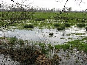Oppenwehe Moor - Bulrushes
