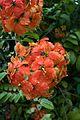 Orange flower balls (27399166636).jpg