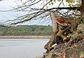 Orlická přehrada - okres Písek (015).jpg