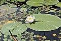 PL-PK Bolestraszyce, arboretum 2011-06-16--12-23-51-027.jpg