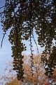 PM 068906 B Oudenaarde.jpg