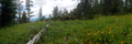 Panorama of summer wildflowers in Wrinkly Face Provincial Park.png