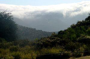 Camanchaca - Camanchaca in Bosque de Fray Jorge National Park