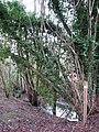Path alongside a drain - geograph.org.uk - 1080848.jpg