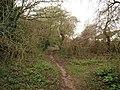 Path near Comeytrowe - geograph.org.uk - 1206502.jpg