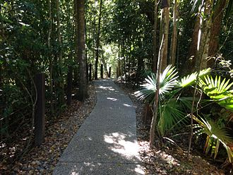 Eungella National Park - There are many well maintained paths in Eungella National Park