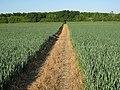 Path through the wheat - geograph.org.uk - 1337810.jpg