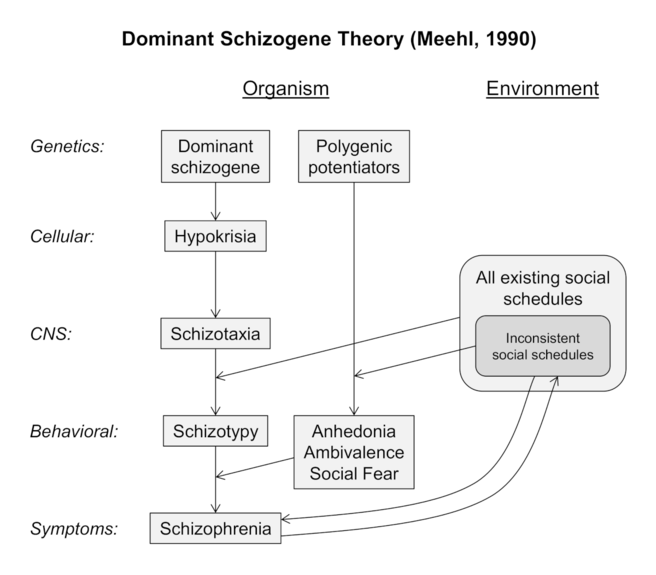 Paul Meehl's dominant schizogene theory of schizophrenia. Proposed effects across the human organism and the environment are displayed. CNS = central nervous system. (Adapted from Meehl PE, 1962, 1989, 1990)[29][31][32]