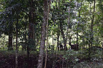 Periyar Tiger Reserve2.jpg