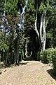 Pescia, villa la guardatoia, bosco all'inglese 01.jpg