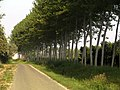 """Photo is attached to GPSed track """"Strada per Antica Cavallotta"""" http-gpsed.com-track-8699453857864061783 - panoramio - florinux (11).jpg"""