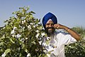 Pic-bt-cotton-punjab-farmer.jpg