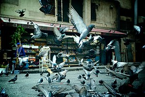 Pigeons taking off. Featured on Flickr Explore*