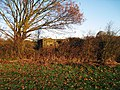Pill Box near Newenden - geograph.org.uk - 1050988.jpg