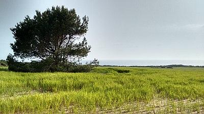 Pinares de Roche con el mar al fondo.jpg