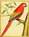Planches enluminées d'histoire naturelle (1765) (14727043396).jpg
