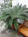 Plant Adaptations 11.jpg