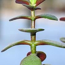 Plantline2.jpg