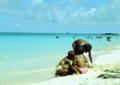 Playa San Andres Colombia by Alvaro Vega.png