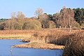 Plover Lake, Lackford - geograph.org.uk - 1068699.jpg