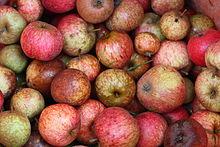 A l'apparition du Pommier à Cidre dans FLORE FRANCAISE 220px-Pommes_%C3%A0_cidre
