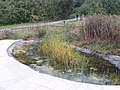 Pond at Welsh Harp Environmental Education Centre - geograph.org.uk - 61782.jpg