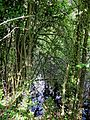 Pondside trees at Hatfield Broad Oak Essex England.jpg