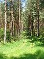 Potsdamer Heide - Waldweg - geo.hlipp.de - 37846.jpg
