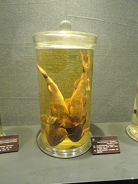 Preserved specimens - Kunming Natural History Museum of Zoology - DSC02402.JPG