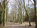 Primrosehill Wood near Tirley Hollow - geograph.org.uk - 152815.jpg