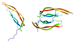 Proteino PDGFB PDB 1pdg.png